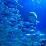 San Diego Sehenswürdigkeiten - Birch Aquarium