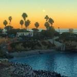 San Diego Sehenswürdigkeiten - La Jolla Cove