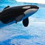 San Diego Sehenswürdigkeiten - SeaWorld San Diego